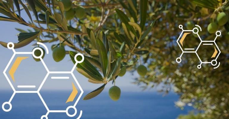 Mediterranean Diet and Epigenetic Changes