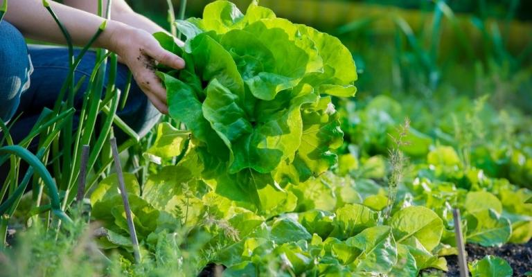 """""""One Planet. One Health."""" Amplifies Local Food Systems Solutions"""